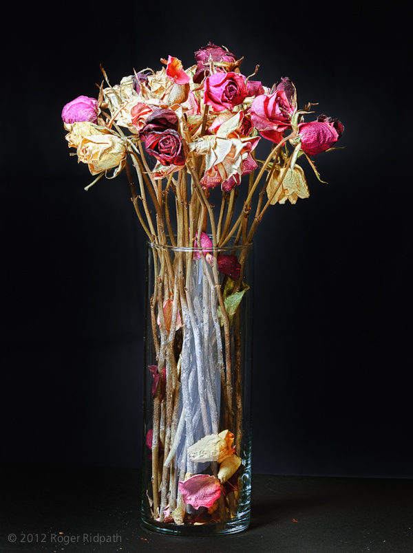 almost dead flowers  u00ab the modern jedi